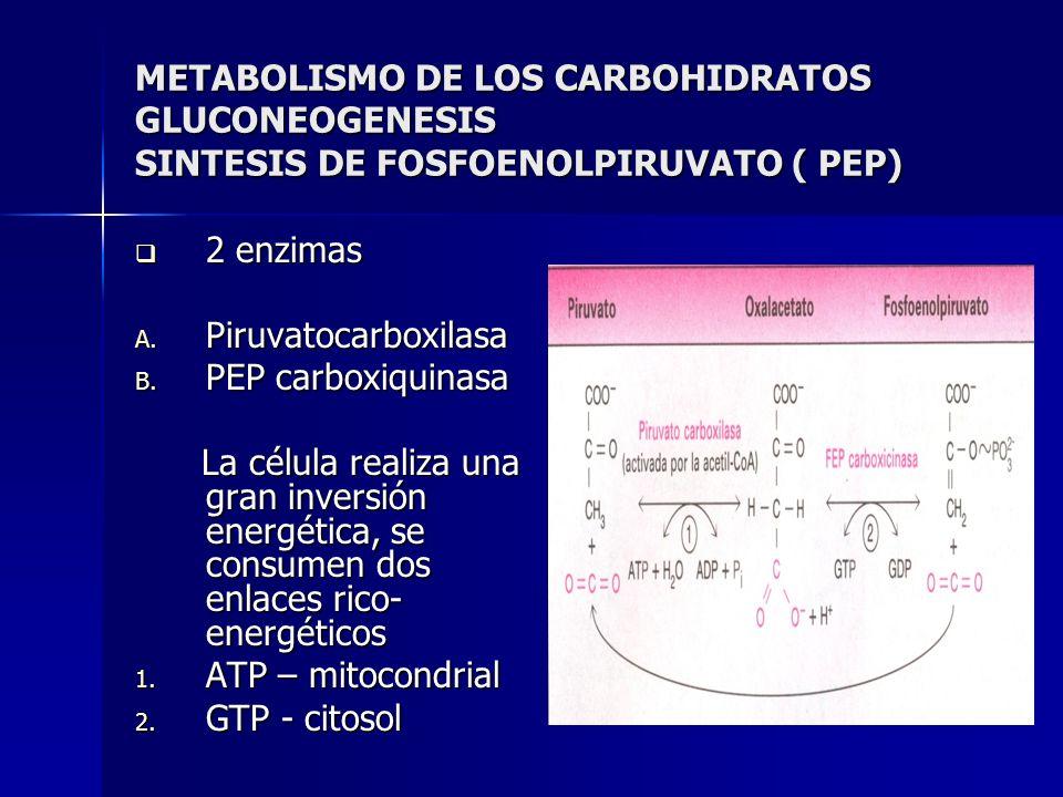 METABOLISMO DE LOS CARBOHIDRATOS GLUCONEOGENESIS SINTESIS DE FOSFOENOLPIRUVATO ( PEP)