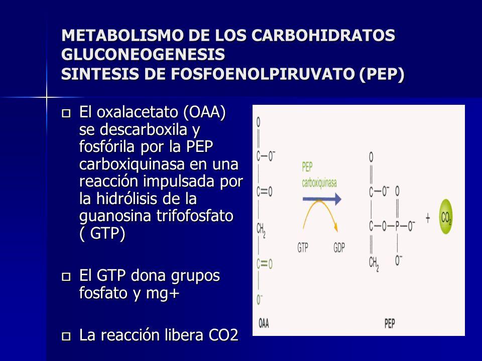 METABOLISMO DE LOS CARBOHIDRATOS GLUCONEOGENESIS SINTESIS DE FOSFOENOLPIRUVATO (PEP)