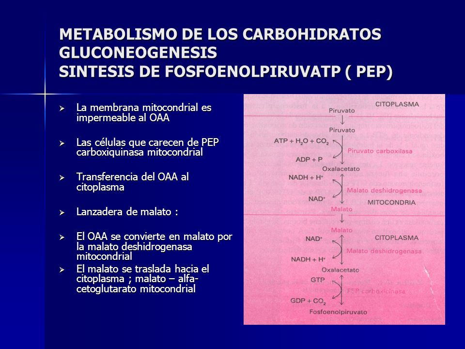 METABOLISMO DE LOS CARBOHIDRATOS GLUCONEOGENESIS SINTESIS DE FOSFOENOLPIRUVATP ( PEP)