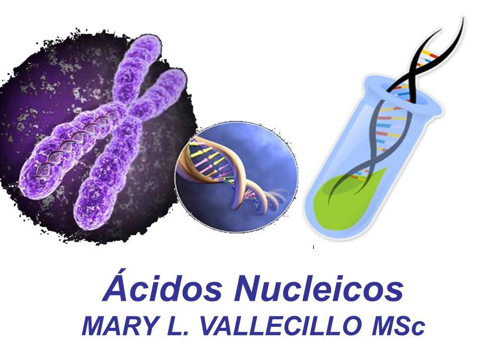 Ácidos Nucleicos MARY L. VALLECILLO MSc
