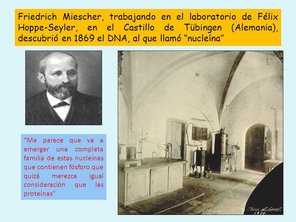 Friedrich Miescher, trabajando en el laboratorio de Félix Hoppe-Seyler, en el Castillo de Tübingen (Alemania), descubrió en 1869 el DNA, al que llamó nucleína