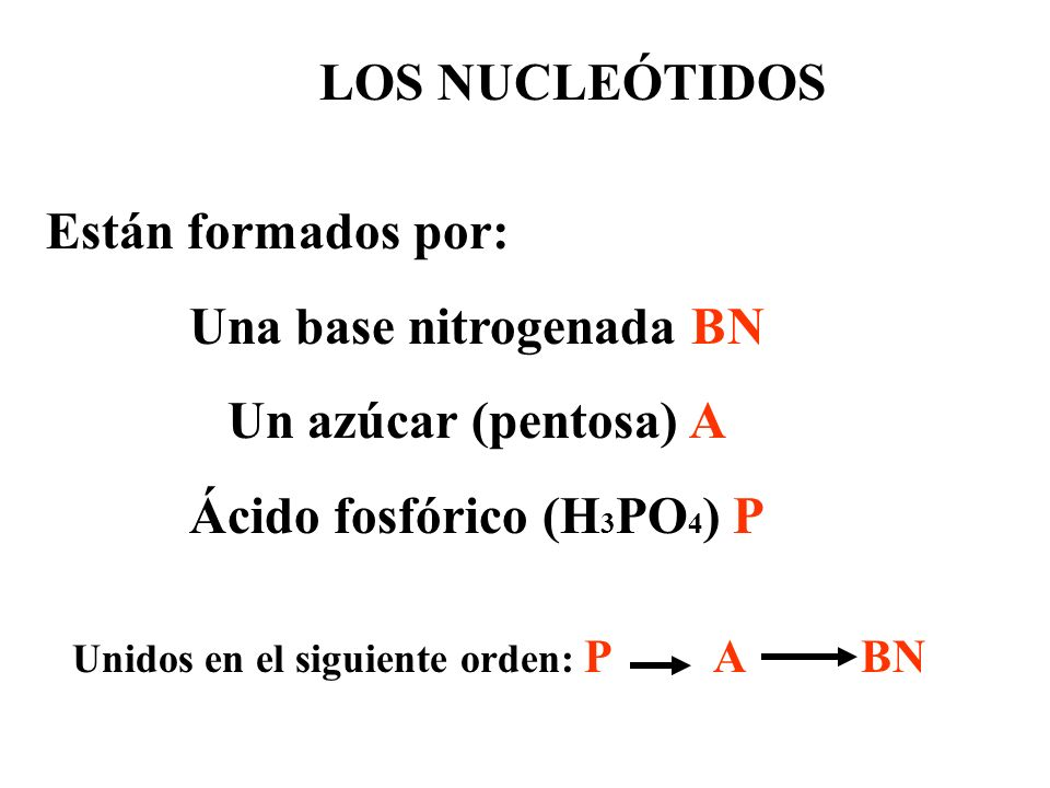 Una base nitrogenada BN Ácido fosfórico (H3PO4) P