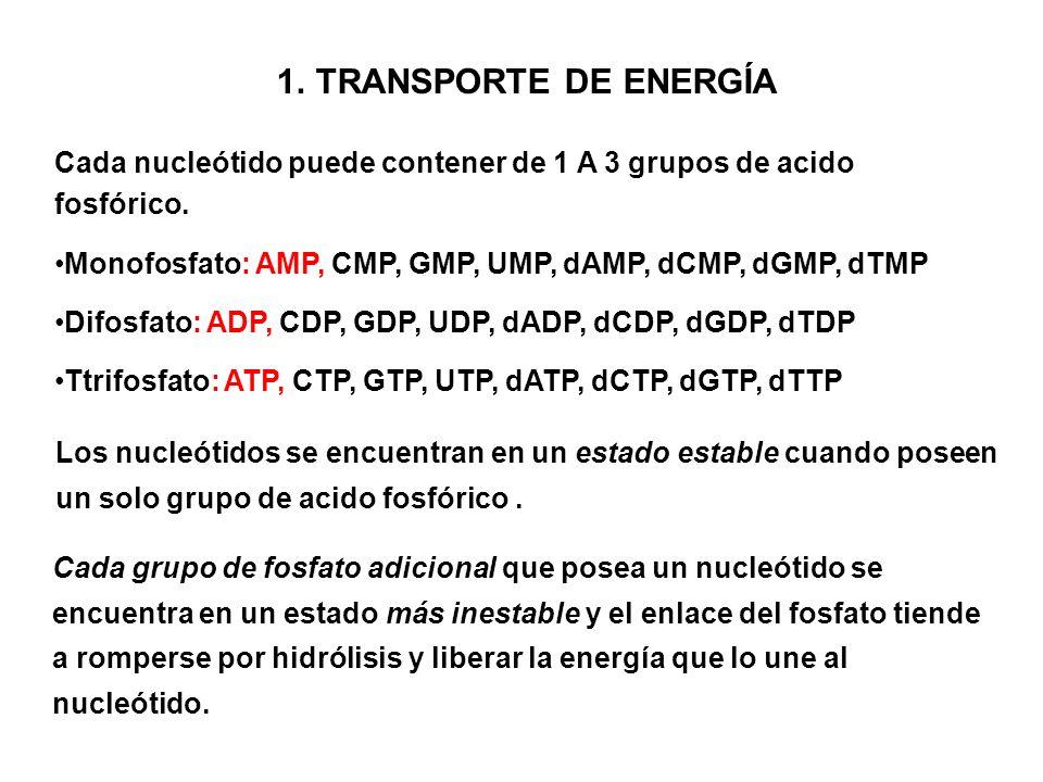 TRANSPORTE DE ENERGÍA Cada nucleótido puede contener de 1 A 3 grupos de acido fosfórico. Monofosfato: AMP, CMP, GMP, UMP, dAMP, dCMP, dGMP, dTMP.