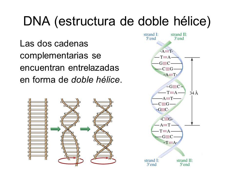 DNA (estructura de doble hélice)