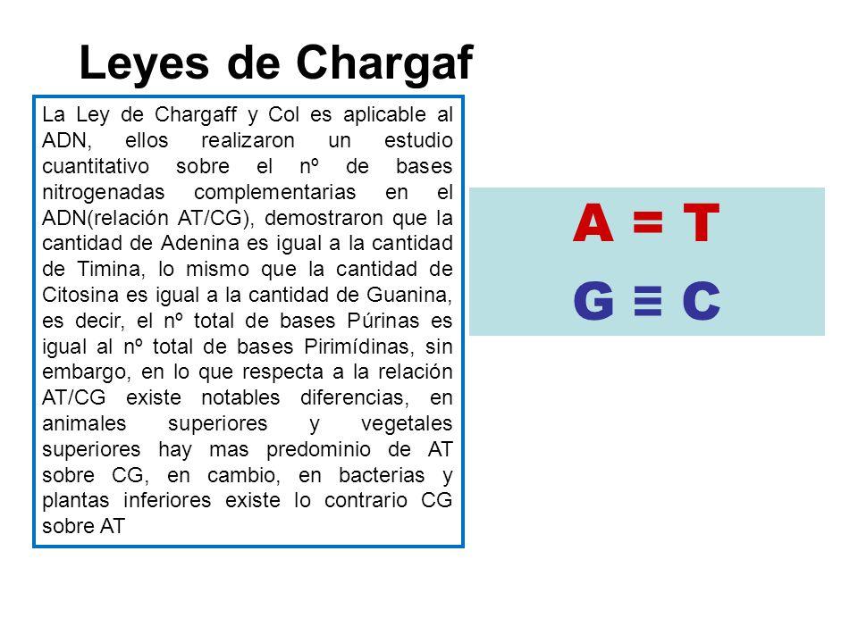 A = T G ≡ C Leyes de Chargaf