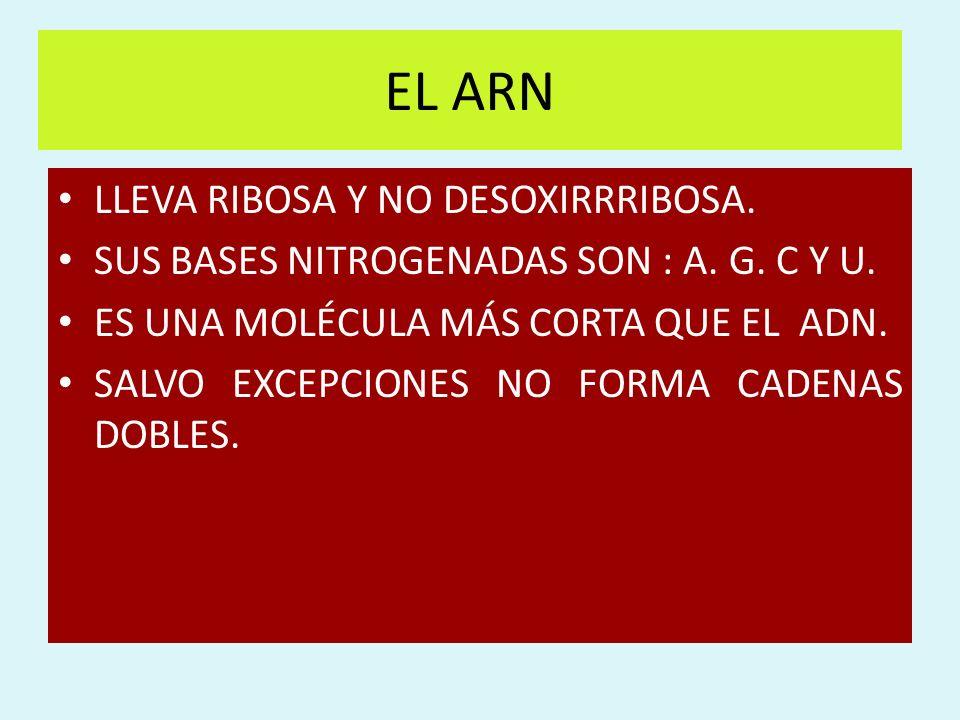 EL ARN LLEVA RIBOSA Y NO DESOXIRRRIBOSA.
