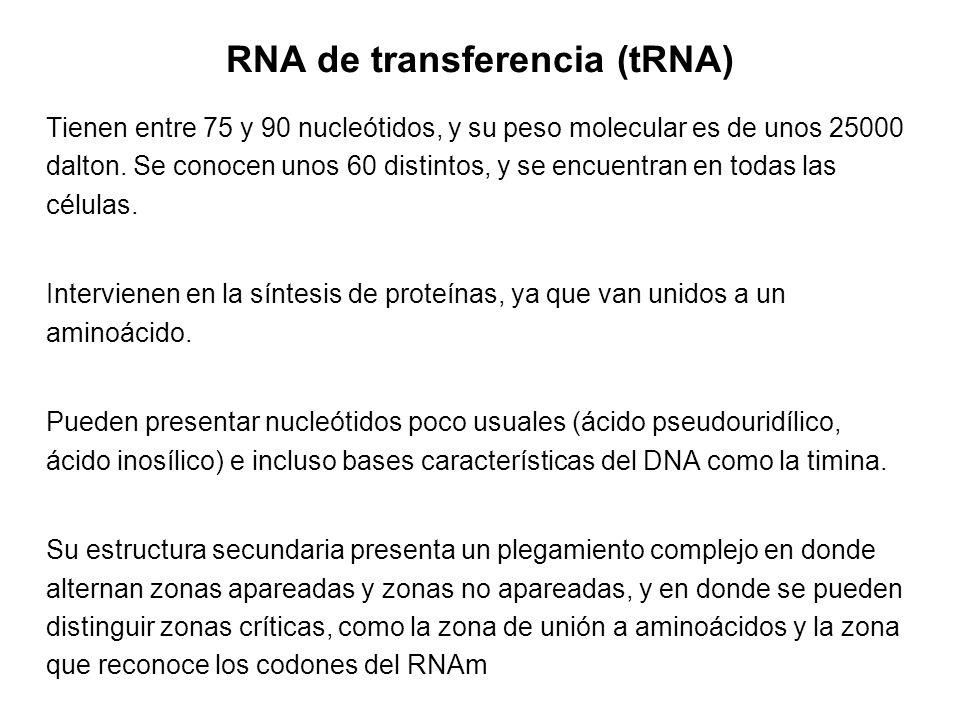 RNA de transferencia (tRNA)