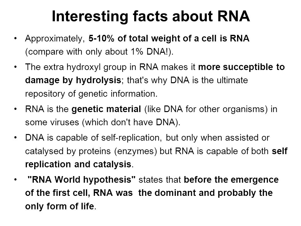 Interesting facts about RNA