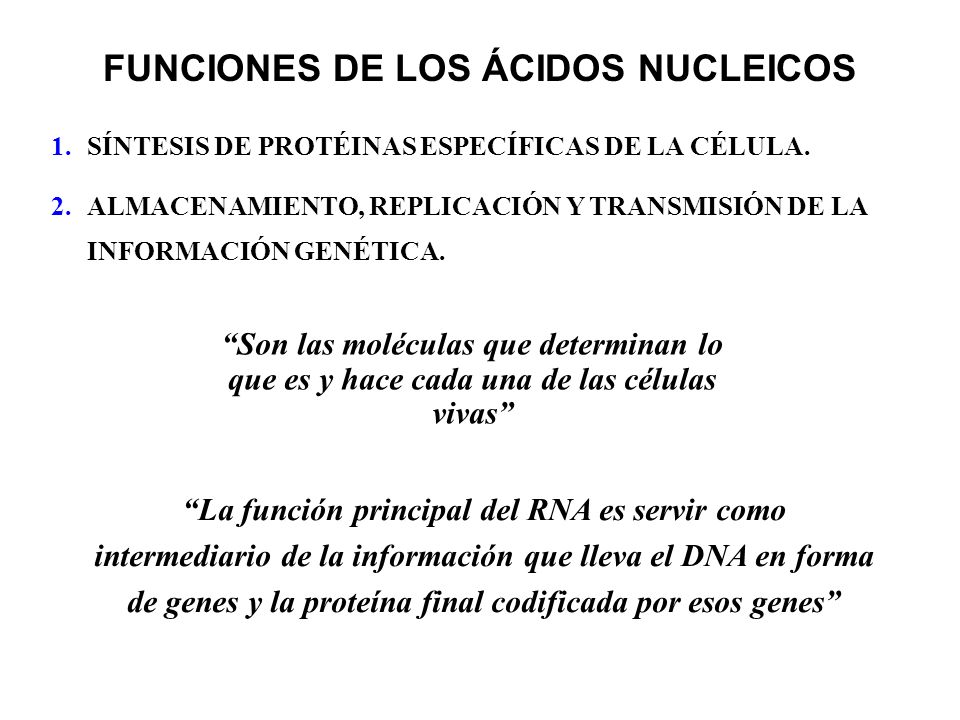 FUNCIONES DE LOS ÁCIDOS NUCLEICOS