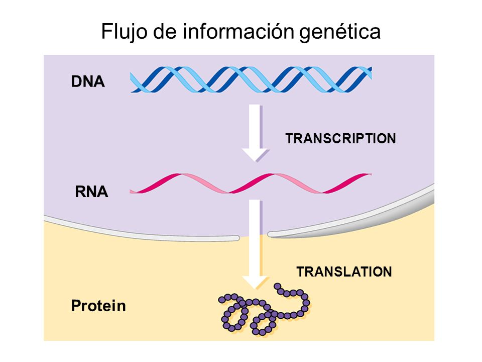 Flujo de información genética