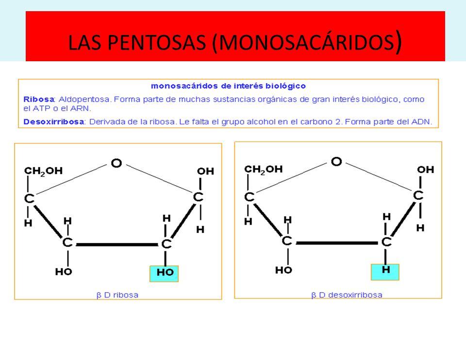 LAS PENTOSAS (MONOSACÁRIDOS)