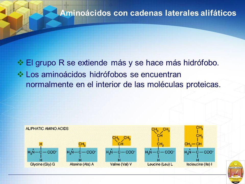 Aminoácidos con cadenas laterales alifáticos