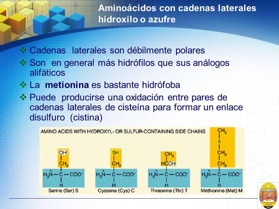Aminoácidos con cadenas laterales hidroxilo o azufre