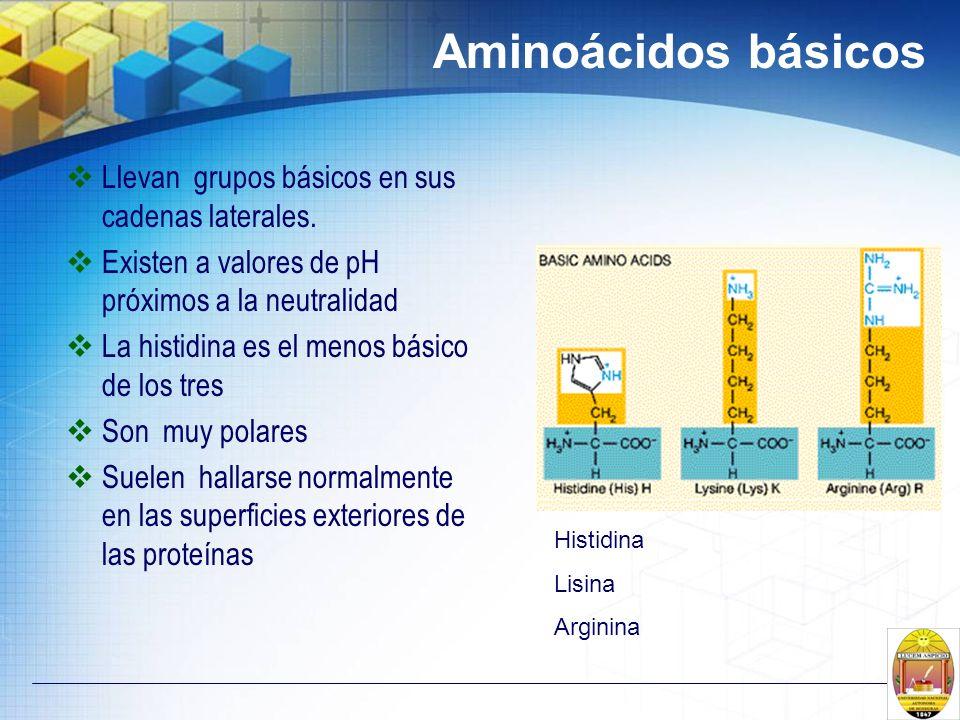 Aminoácidos básicos Llevan grupos básicos en sus cadenas laterales.