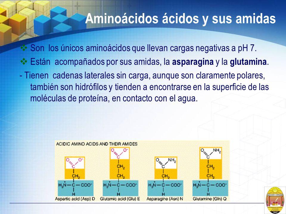 Aminoácidos ácidos y sus amidas