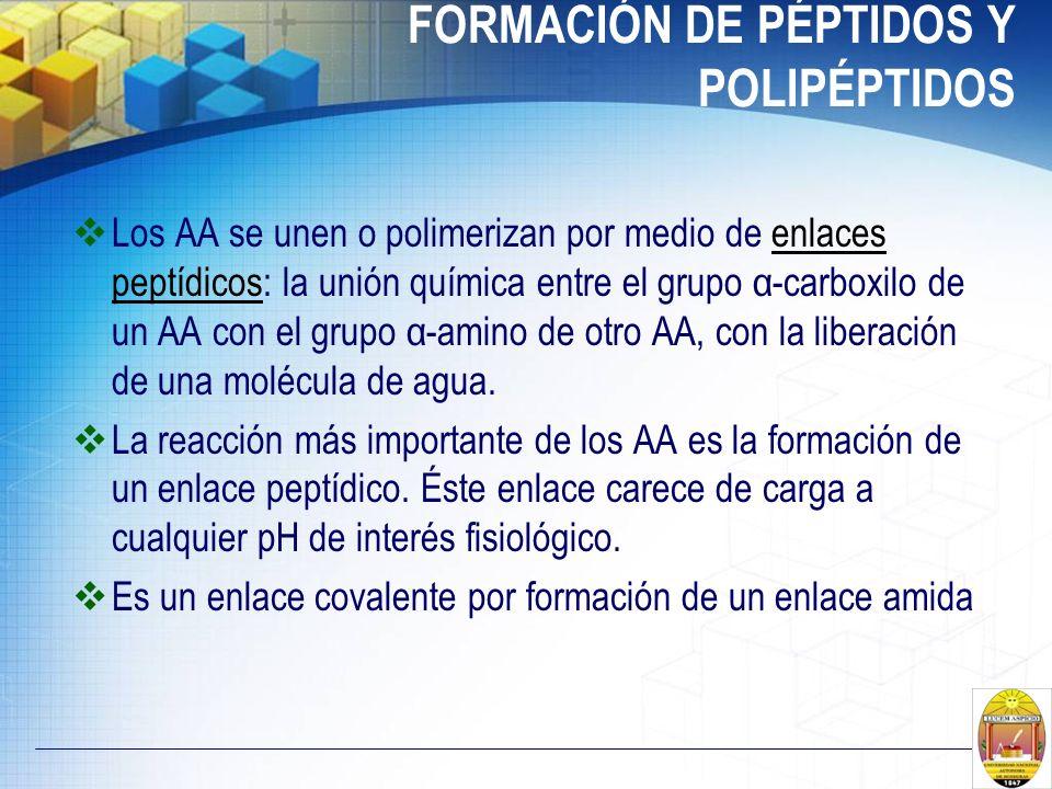 FORMACIÓN DE PÉPTIDOS Y POLIPÉPTIDOS