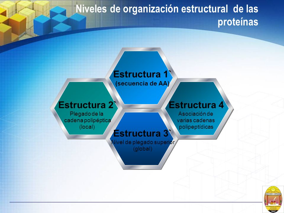Niveles de organización estructural de las proteínas