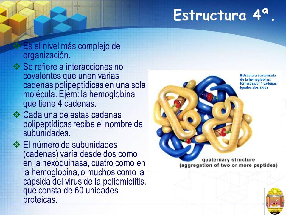 Estructura 4ª. Es el nivel más complejo de organización.