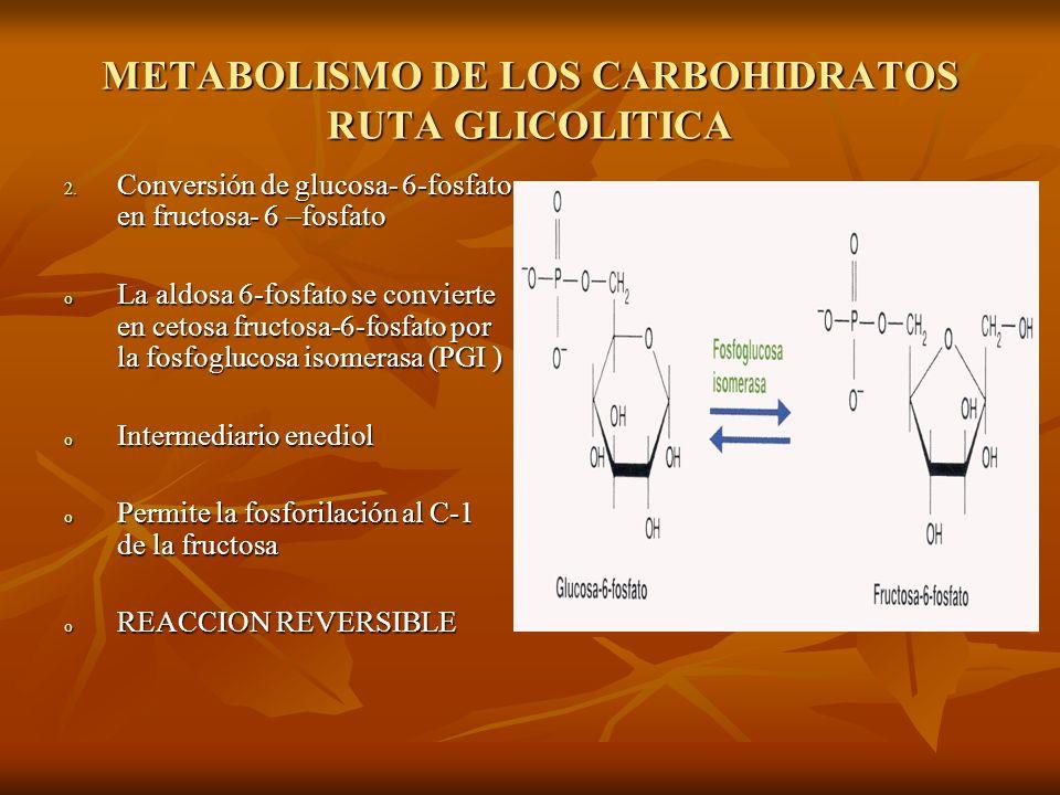 METABOLISMO DE LOS CARBOHIDRATOS RUTA GLICOLITICA