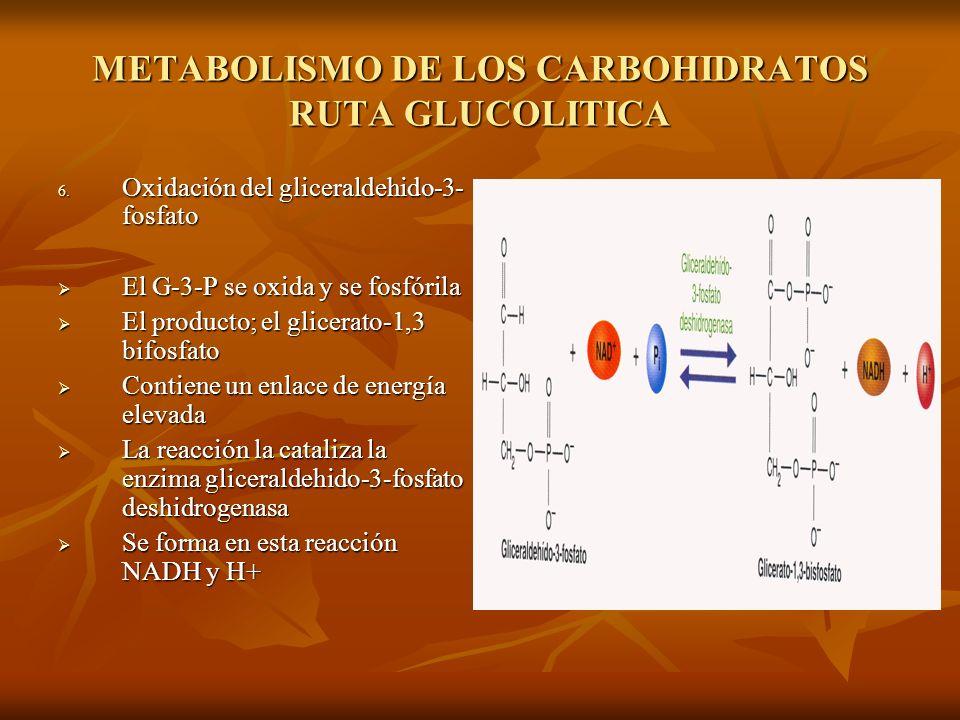 METABOLISMO DE LOS CARBOHIDRATOS RUTA GLUCOLITICA