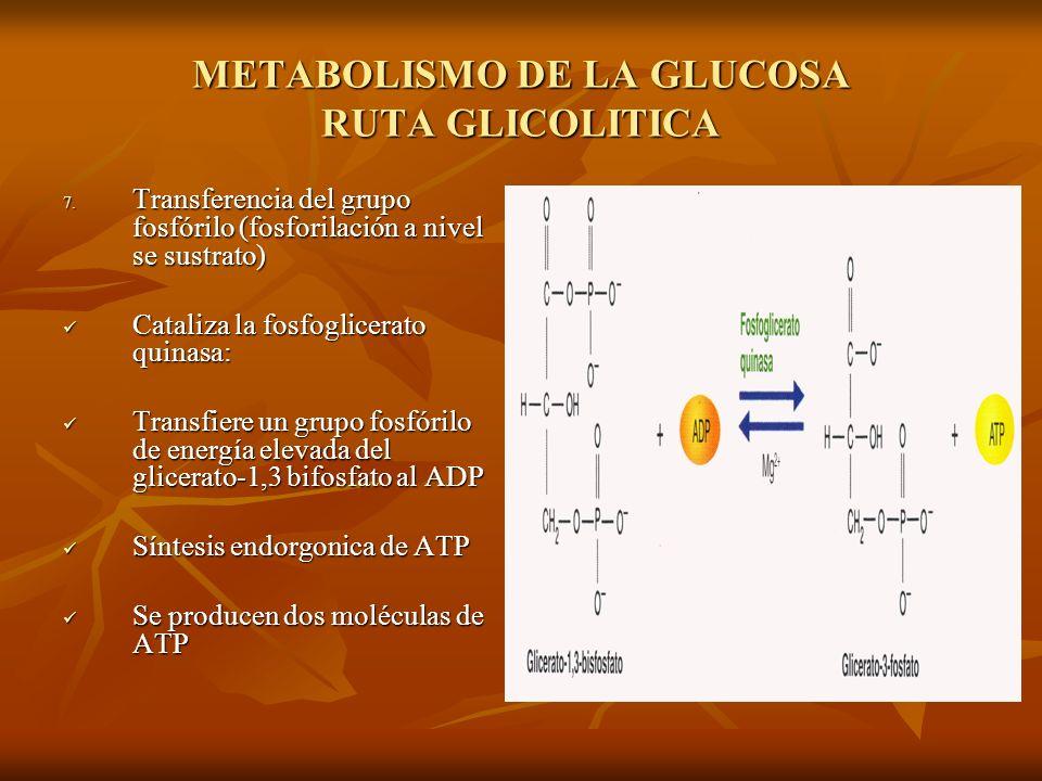 METABOLISMO DE LA GLUCOSA RUTA GLICOLITICA