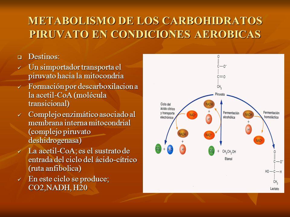METABOLISMO DE LOS CARBOHIDRATOS PIRUVATO EN CONDICIONES AEROBICAS