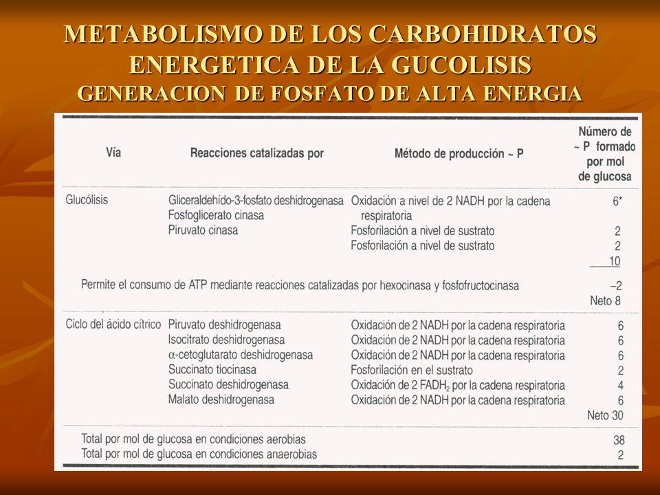METABOLISMO DE LOS CARBOHIDRATOS ENERGETICA DE LA GUCOLISIS GENERACION DE FOSFATO DE ALTA ENERGIA
