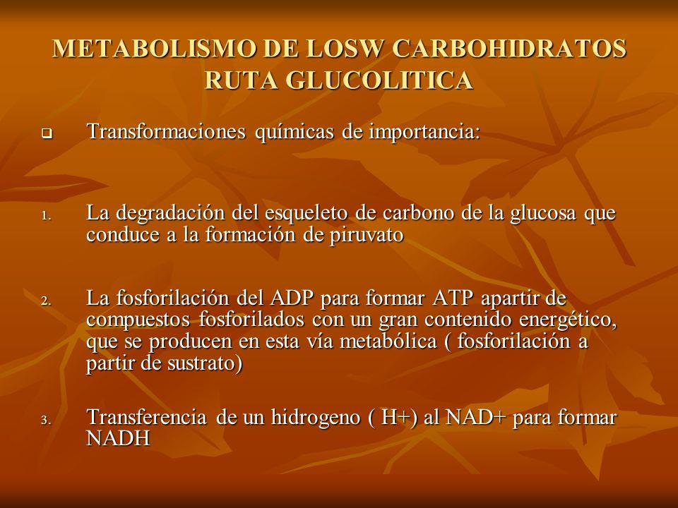 METABOLISMO DE LOSW CARBOHIDRATOS RUTA GLUCOLITICA