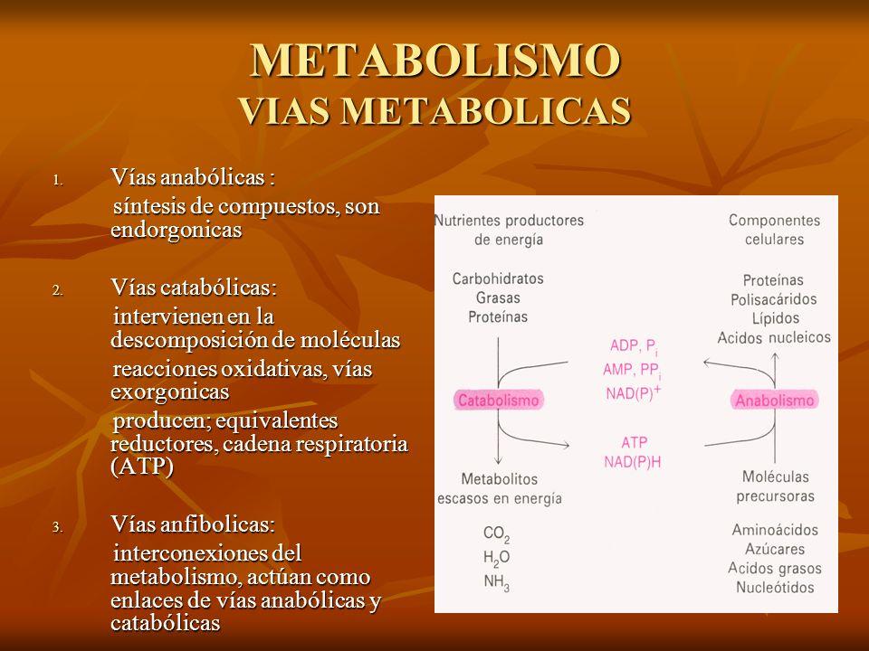 METABOLISMO VIAS METABOLICAS