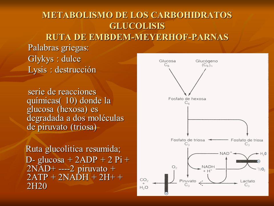 METABOLISMO DE LOS CARBOHIDRATOS GLUCOLISIS RUTA DE EMBDEM-MEYERHOF-PARNAS