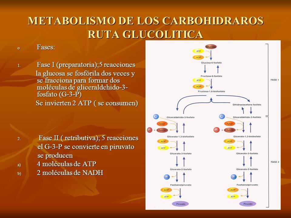 METABOLISMO DE LOS CARBOHIDRAROS RUTA GLUCOLITICA