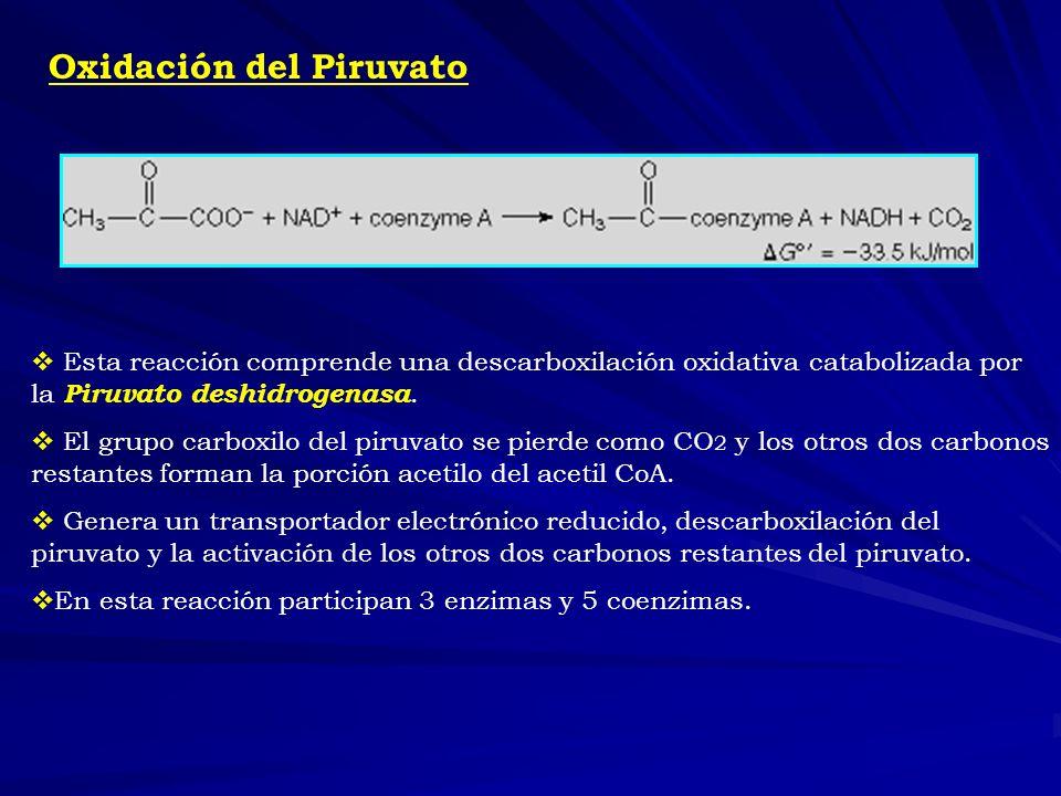 Oxidación del Piruvato