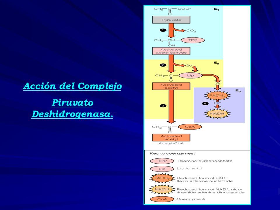 Piruvato Deshidrogenasa.