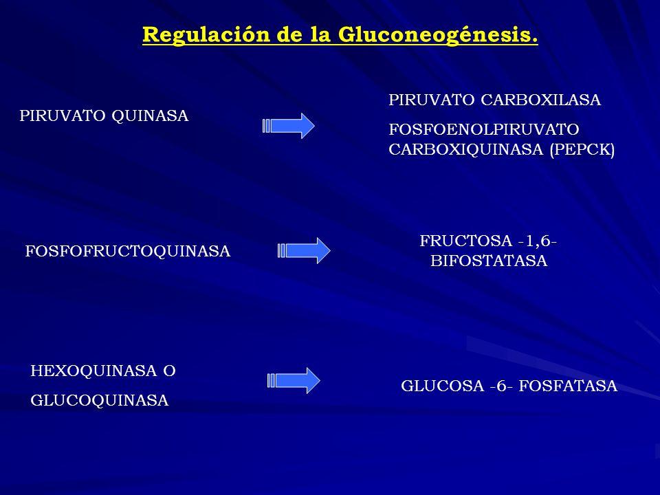 Regulación de la Gluconeogénesis.