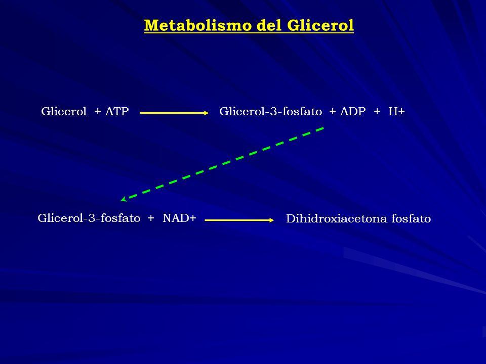 Metabolismo del Glicerol