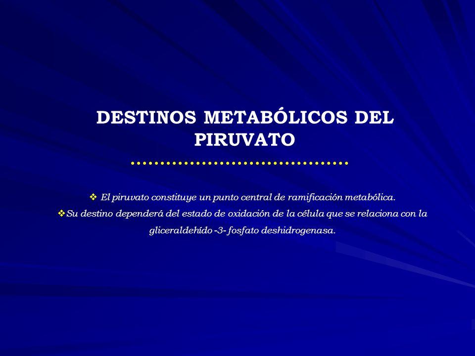 DESTINOS METABÓLICOS DEL PIRUVATO