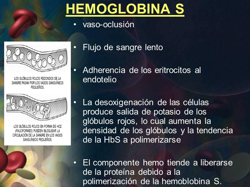HEMOGLOBINA S vaso-oclusión Flujo de sangre lento