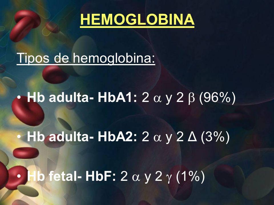 HEMOGLOBINA Tipos de hemoglobina: Hb adulta- HbA1: 2  y 2  (96%)