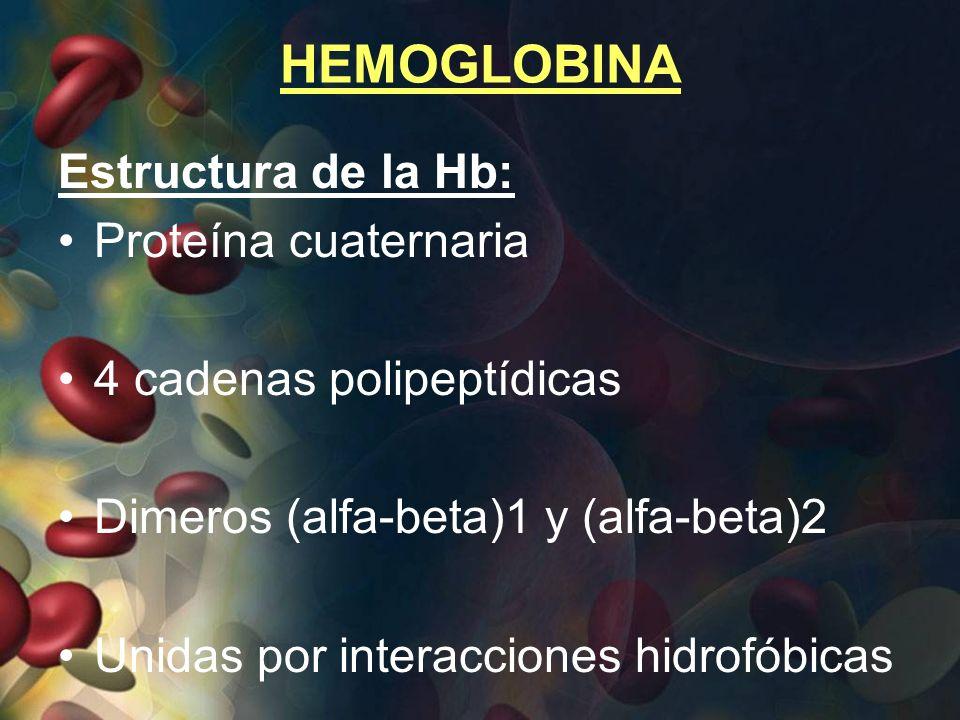 HEMOGLOBINA Estructura de la Hb: Proteína cuaternaria
