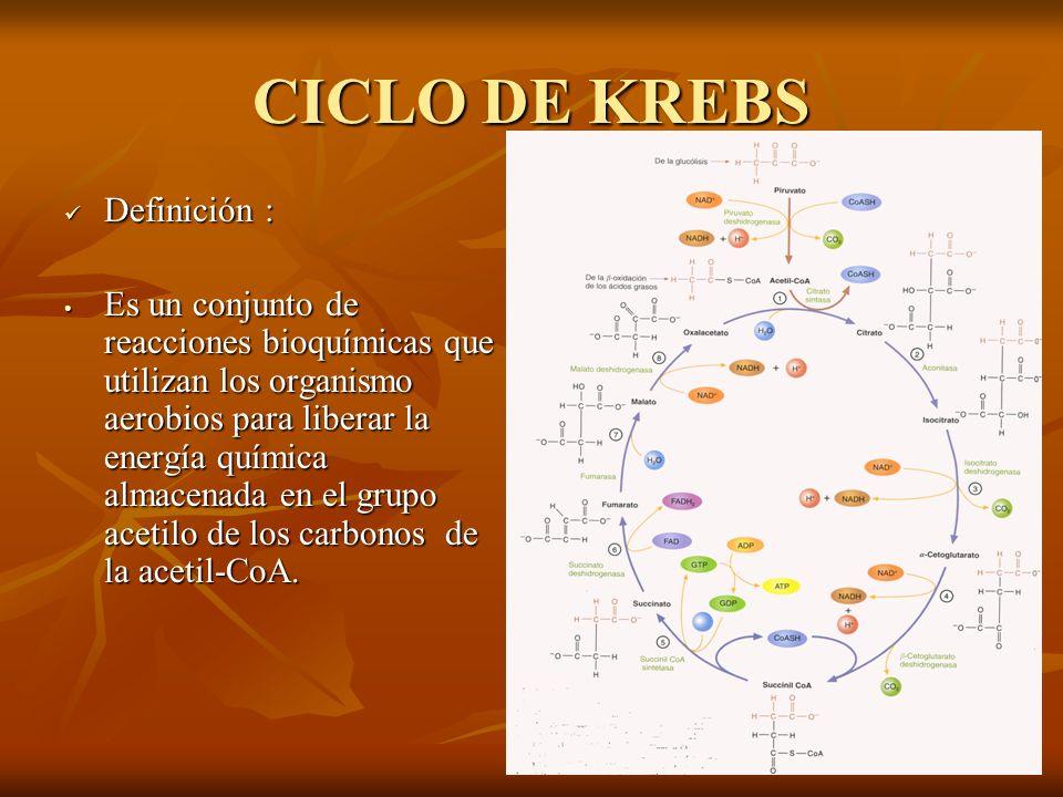 CICLO DE KREBS Definición :