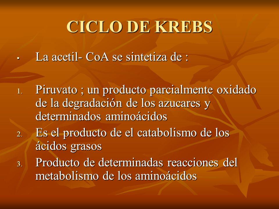 CICLO DE KREBS La acetil- CoA se sintetiza de :