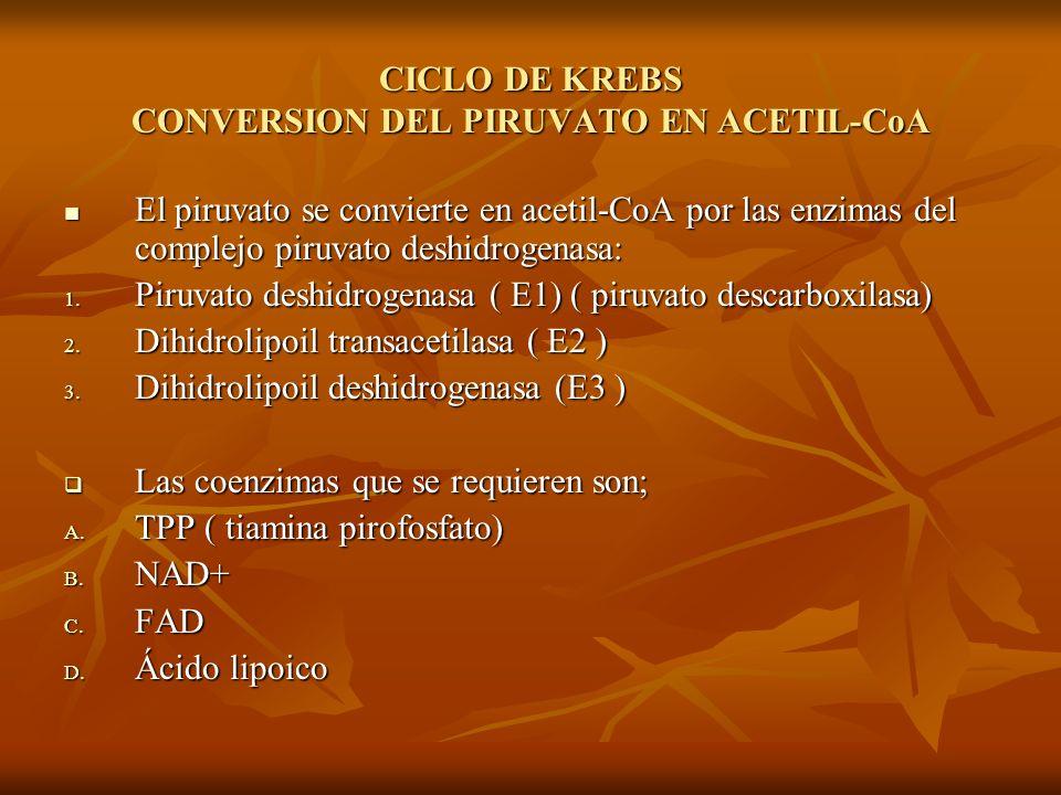 CICLO DE KREBS CONVERSION DEL PIRUVATO EN ACETIL-CoA