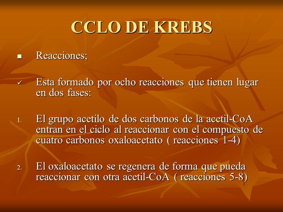 CCLO DE KREBS Reacciones;