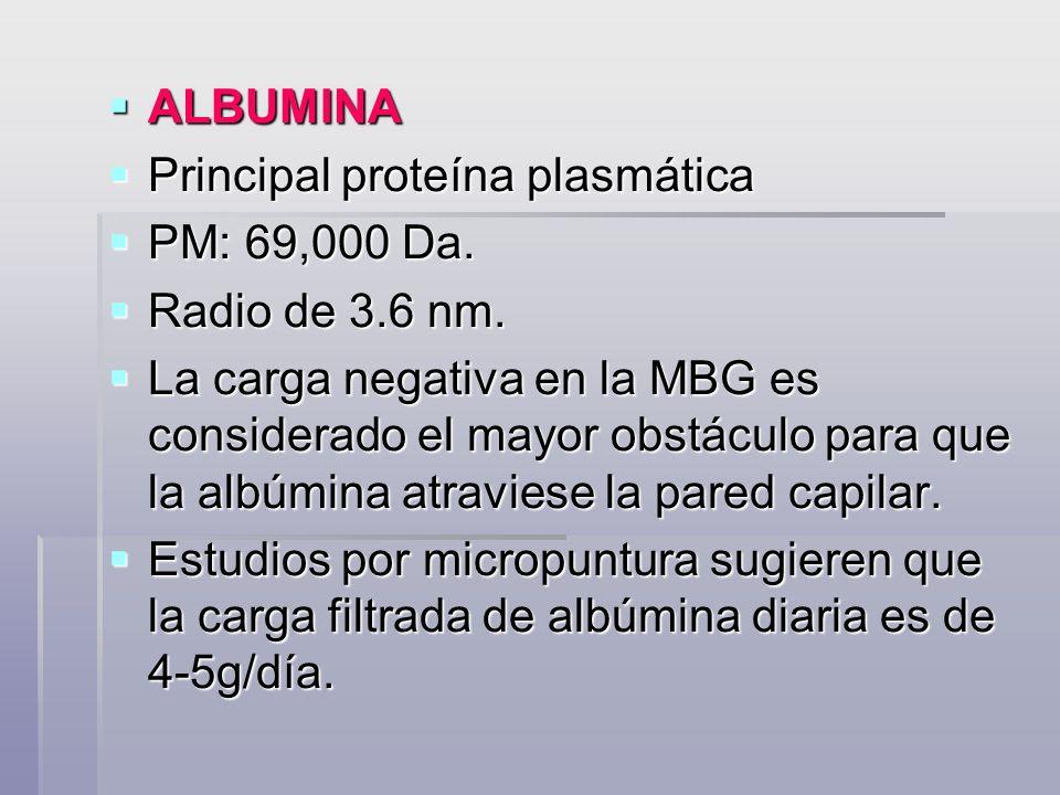 ALBUMINA Principal proteína plasmática. PM: 69,000 Da. Radio de 3.6 nm.