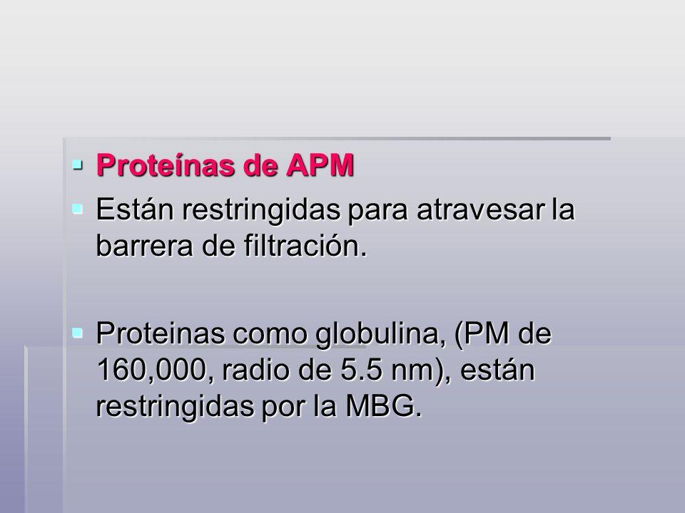 Proteínas de APMEstán restringidas para atravesar la barrera de filtración.