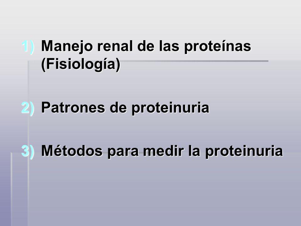 Manejo renal de las proteínas (Fisiología)