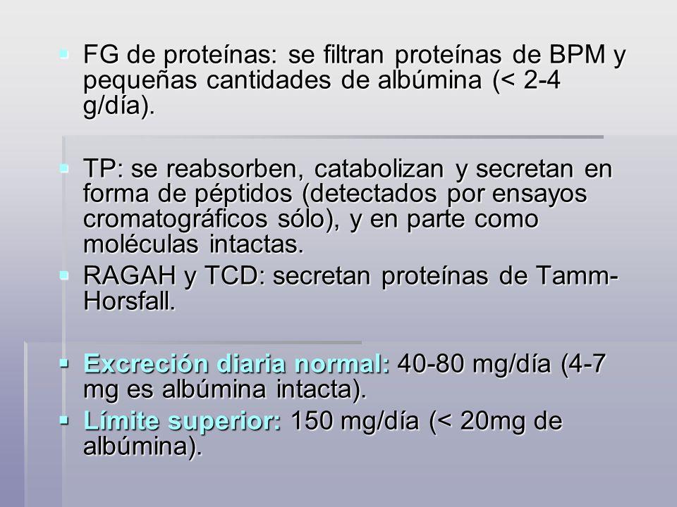 FG de proteínas: se filtran proteínas de BPM y pequeñas cantidades de albúmina (< 2-4 g/día).