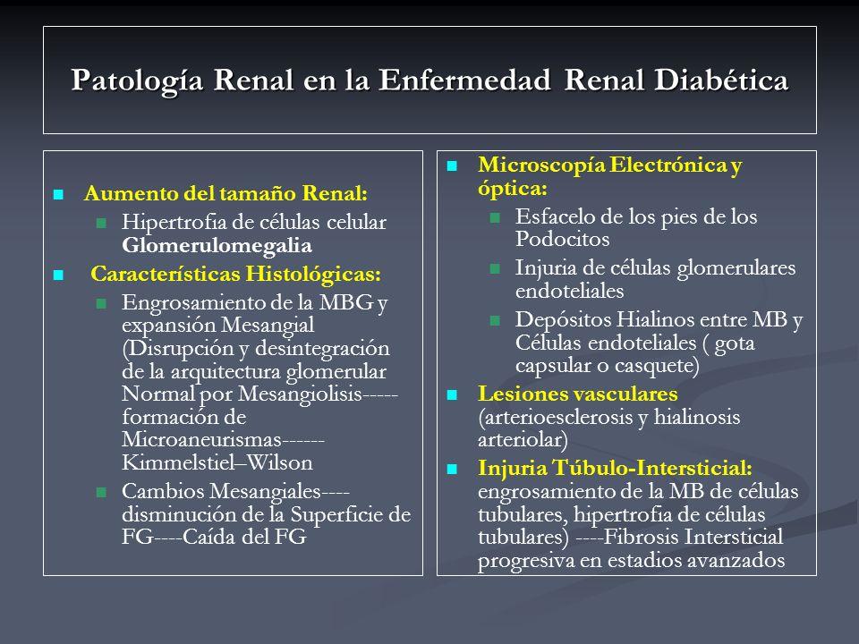 Patología Renal en la Enfermedad Renal Diabética