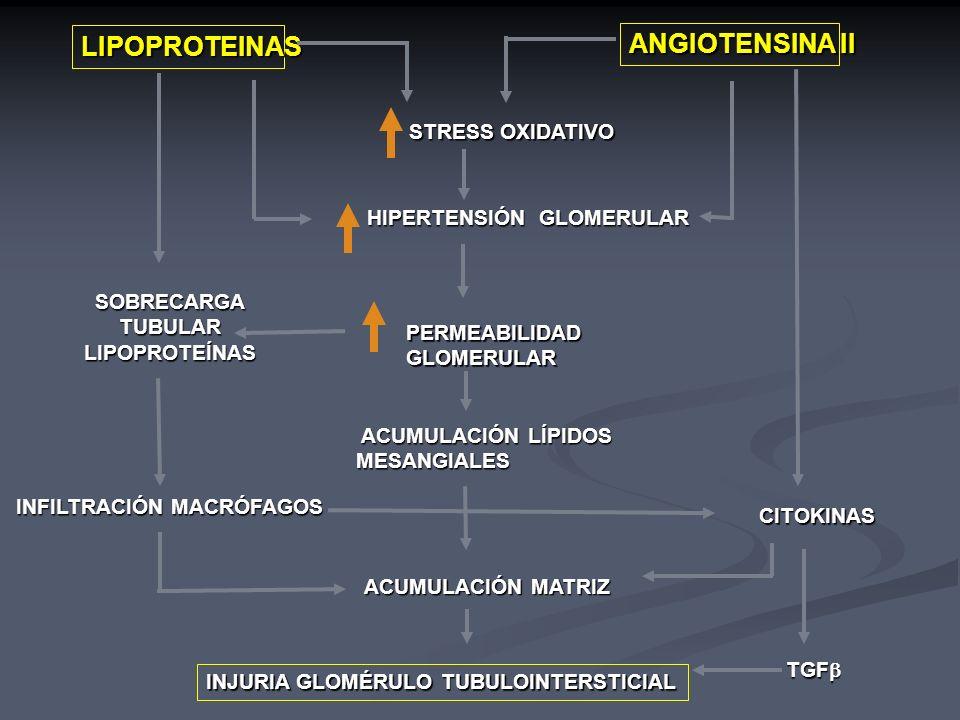 LIPOPROTEINAS ANGIOTENSINA II STRESS OXIDATIVO HIPERTENSIÓN GLOMERULAR