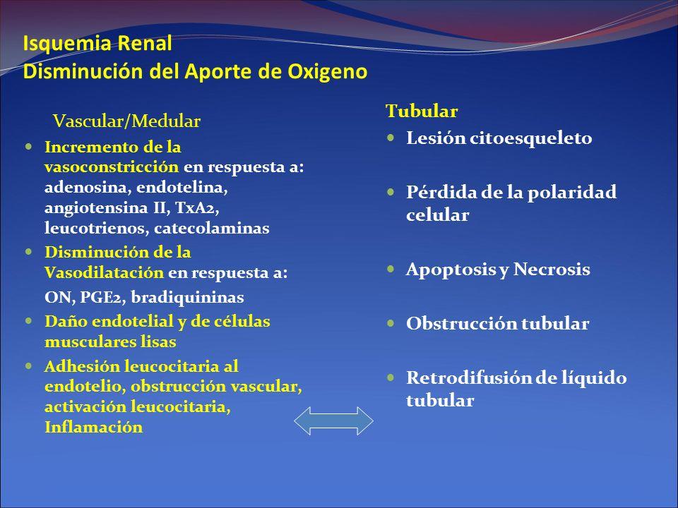 Isquemia Renal Disminución del Aporte de Oxigeno